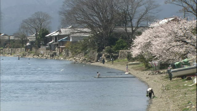 beach with a row of cherry trees. - shiga prefecture stock videos & royalty-free footage