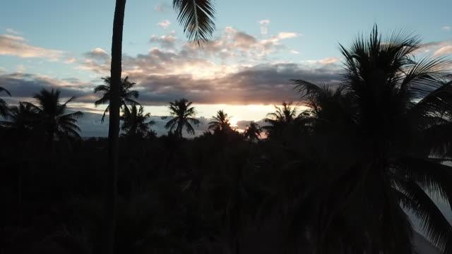 vidéos et rushes de beach with coconut trees against the light, before sunset - moorea