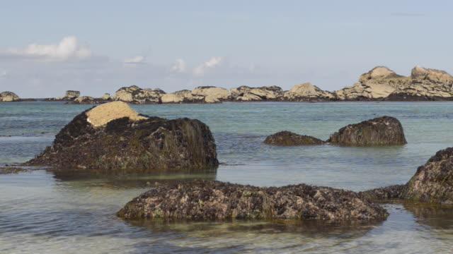 beach with seaweed on rocks - finisterra bretagna video stock e b–roll