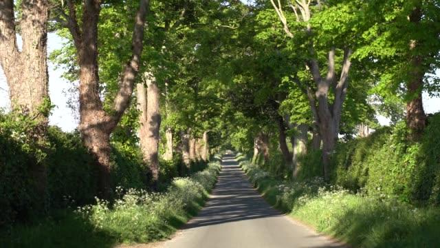 beachamwell rd barton bendish norfolk - environmental issues stock videos & royalty-free footage