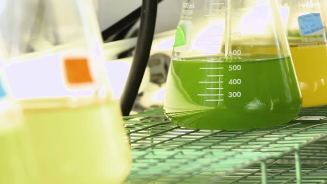 ECU PAN Beakers of Bubbling Green Liquid in Biology Tech Laboratory / Eastville, Virginia, United States