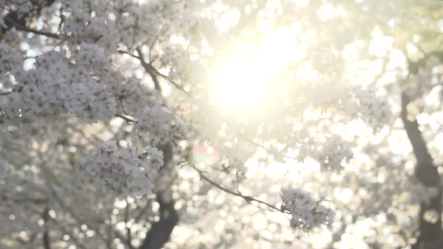 beams of light filtering through blossoms - political action committee stock videos & royalty-free footage