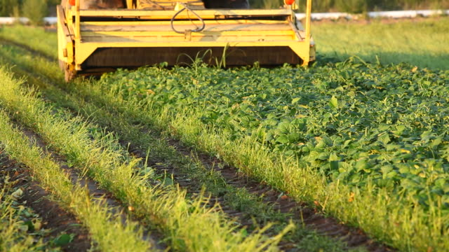 bean harvester in field - green bean stock videos & royalty-free footage