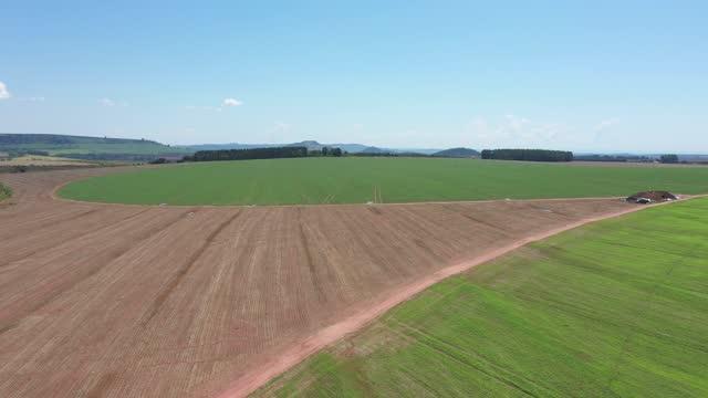 ビープランテーション - agricultura点の映像素材/bロール