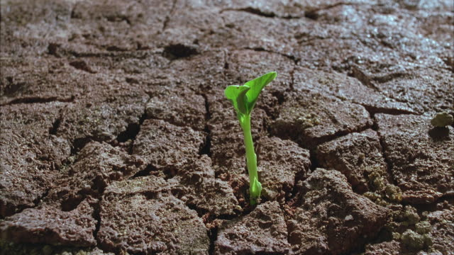t/l, cu, bean sprouting of cracked soil - growth stock videos & royalty-free footage