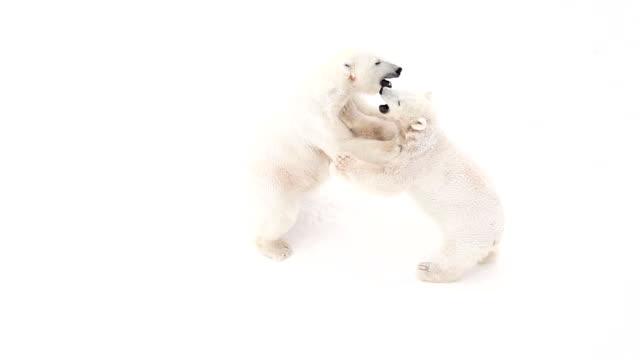 bear cub - bear cub stock videos and b-roll footage