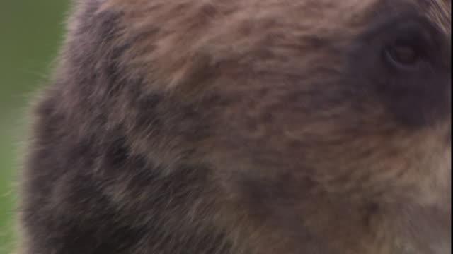 A bear looks around.
