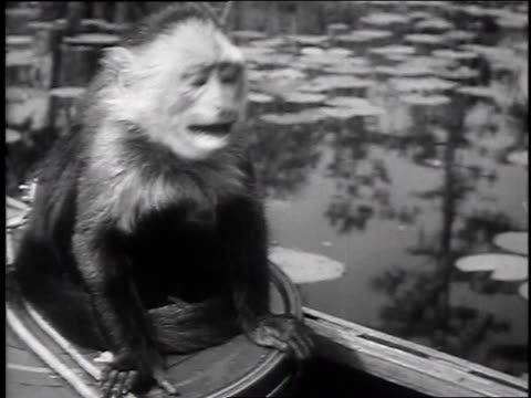 1947 montage bear swimming in swamp, climbing tree / okefenokee swamp, georgia, united states - okefenokee national wildlife refuge stock videos and b-roll footage