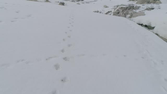 bear tracks on snowfield of kamchatka, russia - traccia video stock e b–roll