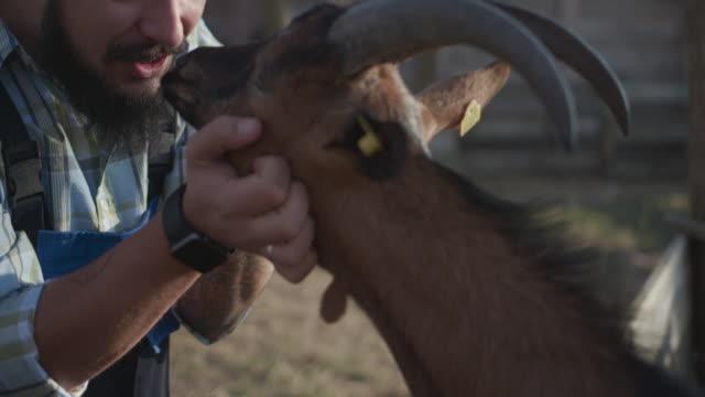 農場でヤギを養うひげを生やした男 - シェーブルチーズ点の映像素材/bロール
