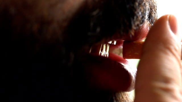 bearded man smoking. close up shot. - smoking issues stock videos & royalty-free footage