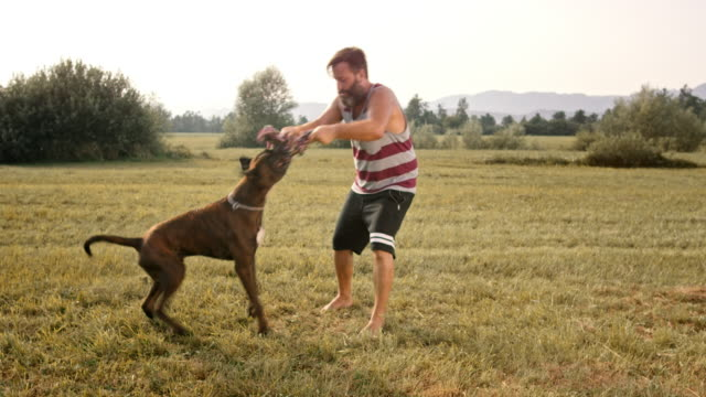 slo mo bearded owner pulling rope with his dog in the meadow - 40 44 years stock videos and b-roll footage