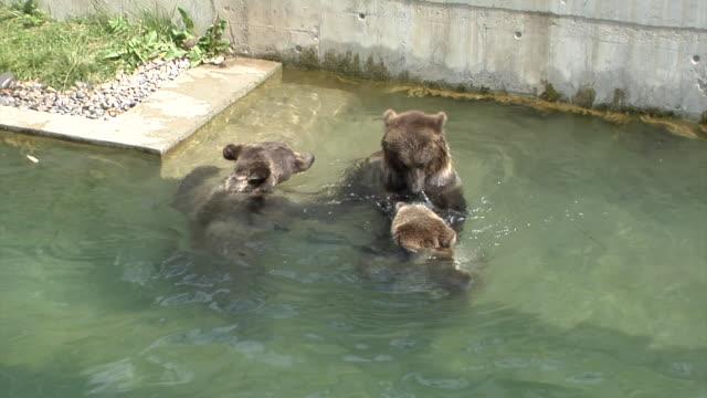 vidéos et rushes de bears of bern - petit groupe d'animaux