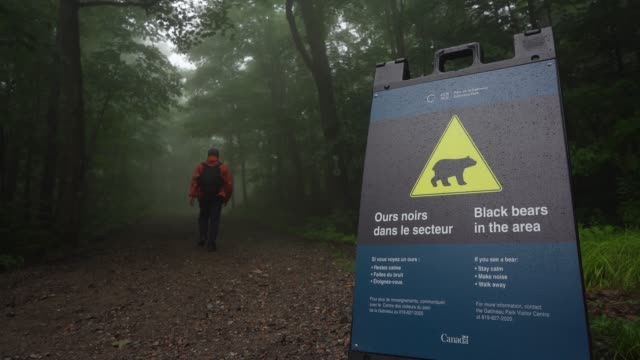 bears sign of passage - environment stock videos & royalty-free footage