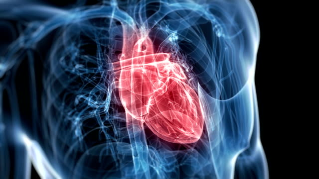 beating heart - biomedical illustration video stock e b–roll