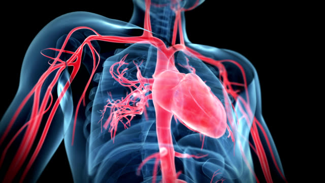 beating heart - biomedical animation video stock e b–roll