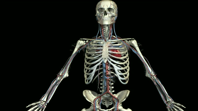beating heart - vena cava vein stock videos & royalty-free footage
