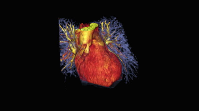 beating human heart - modello dimostrativo video stock e b–roll