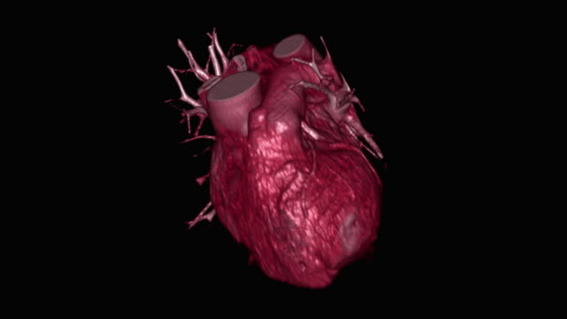 beating human heart - pulsating stock videos & royalty-free footage