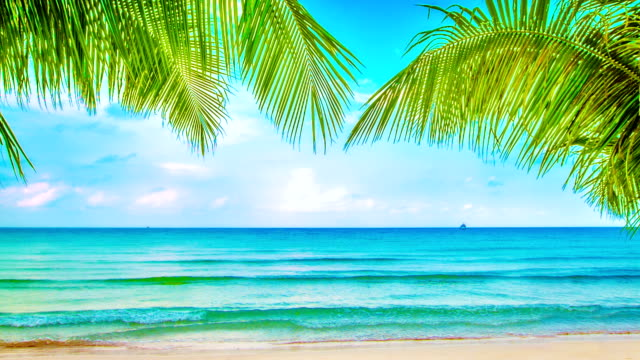 beaty beach - palm tree stock videos & royalty-free footage