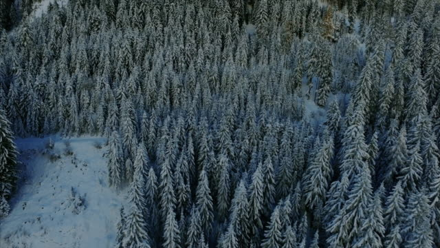 beautiful aerial drone shot beginning on snow-covered trees. the drone tracks backwards and pans up to reveal a massive swiss alp mountain covered by trees and snow. - bavarian alps stock videos & royalty-free footage