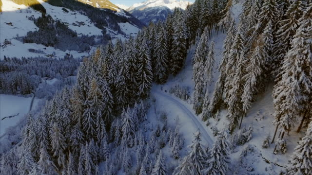 beautiful aerial drone shot tracks up from the snow covered trees to reveal the beautiful sunlit snow covered alps. - winter sport stock videos and b-roll footage