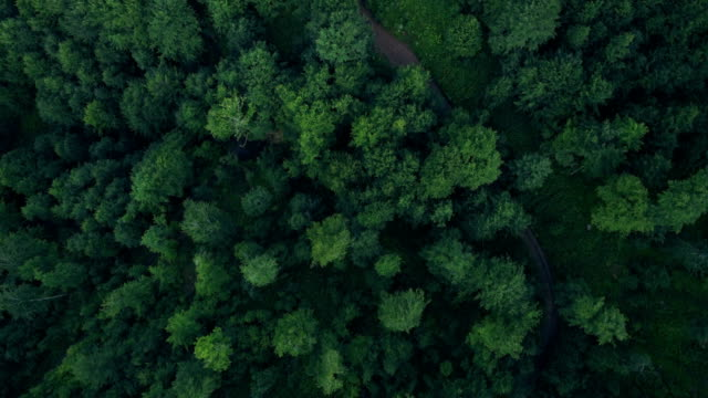 beautiful aerial nature flyover - pine tree stock videos & royalty-free footage