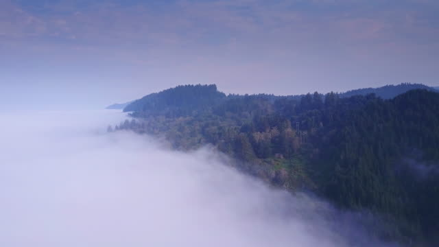Beautiful Aerial Shot of California Coastal Redwood Forest