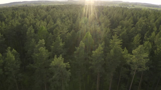 beautiful aerial view of forest - poland stock videos & royalty-free footage