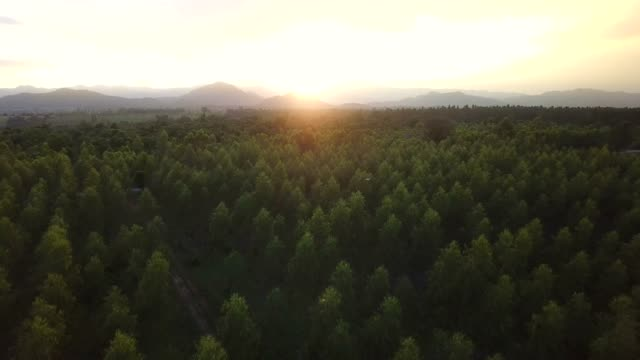 beautiful aerial view of forest - evergreen stock videos & royalty-free footage
