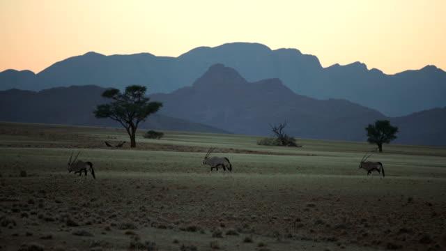 vídeos y material grabado en eventos de stock de hermosa sabana africana. salida del sol. - the nature conservancy