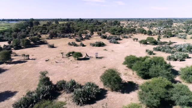 美しいアフリカのサバンナ。ドローンのビュー ポイント。 - ボツワナ点の映像素材/bロール
