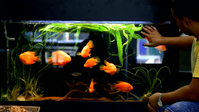 belle aquarium