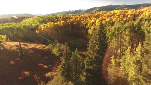 vídeos de stock e filmes b-roll de beautiful aspen trees low reveal sun flare aerial, drone, 4k, rocky mountains, amazing, autumn, colorful, colors, fall, fiery, forest, green, landscape, leaves, orange, red, trees, aspen, yellow, colorado, kebler pass, mountain, grove, raw.mov - choupo tremedor