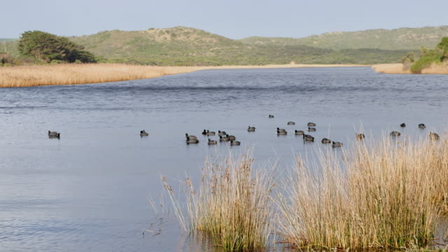 beautiful atmosphere of lake in australia - water bird stock videos & royalty-free footage