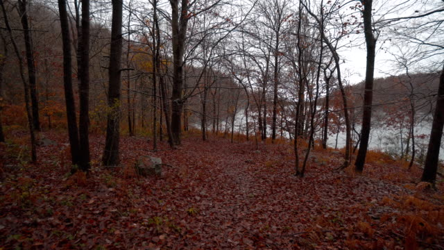 Beautiful autumn beech forest under the rain in the Catalan mountains