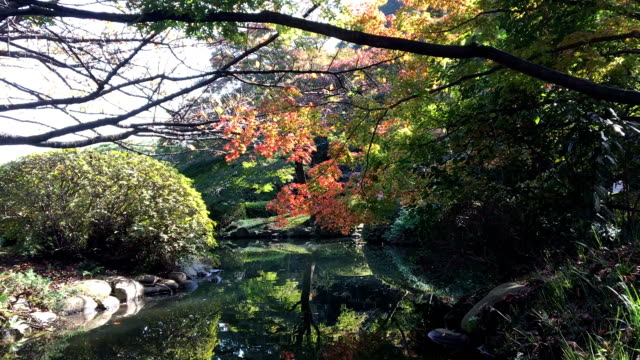 beautiful autumn color in the park - satoyama scenery stock videos & royalty-free footage