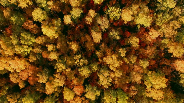 beautiful autumn forest in europe from above at sunset - top capo di vestiario video stock e b–roll