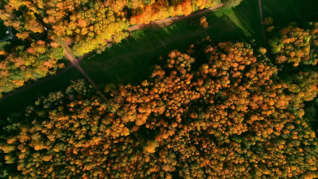 beautiful autumn forest in europe from above at sunset - vertical stock videos & royalty-free footage