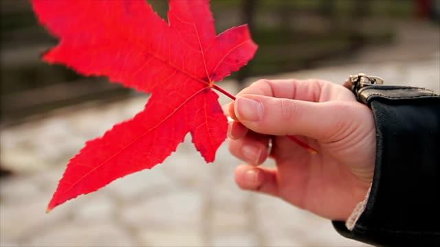 Schöne Herbst-Blatt