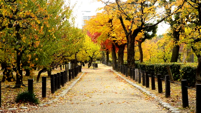 beautiful autumn park - autumn leaf color stock videos and b-roll footage