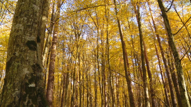 hd dolly: beautiful autumn trees in sunlight - tree trunk stock videos & royalty-free footage