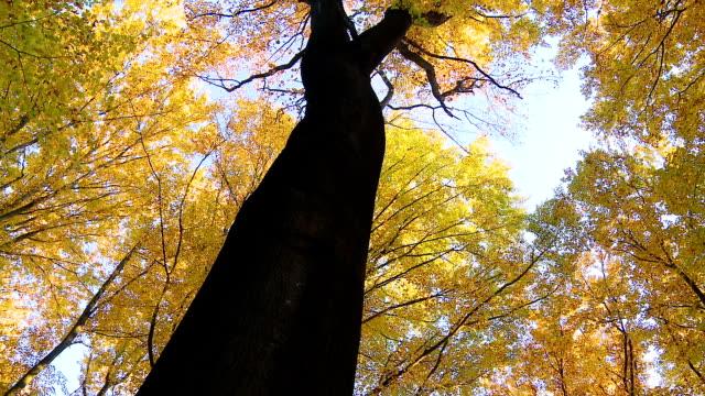 HD: Beautiful Autumn Trees In Sunlight