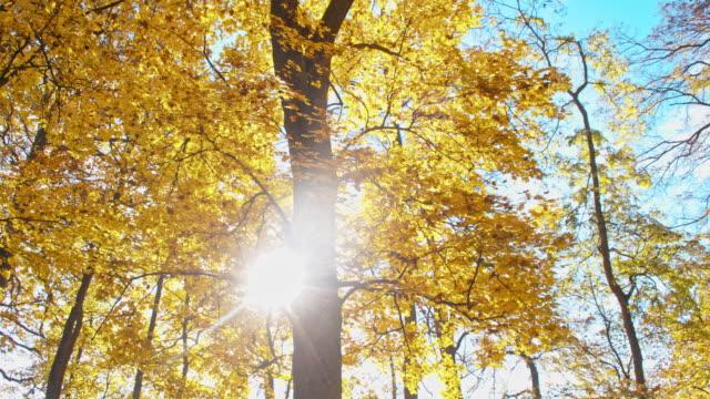 SLO MO Beautiful autumn trees