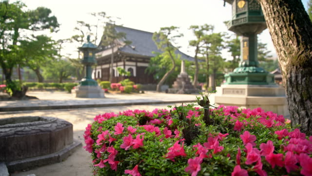 ds beautiful backyard of the temple - shrine stock videos & royalty-free footage