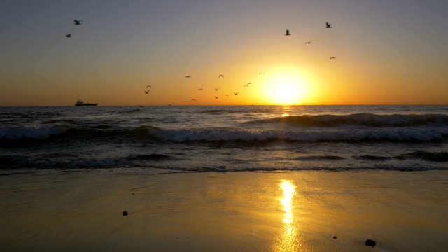 Beautiful beach at sunset, birds flying by, and woman walking through scene