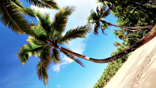 wunderschöne strand - tropischer baum stock-videos und b-roll-filmmaterial