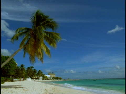 Beautiful beach - WA side angled view, waves lapping white sand, palm tree leaning into shot, distant buildings, blue sky