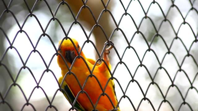 Beautiful bird, Sun Conure bird ,lovebirds