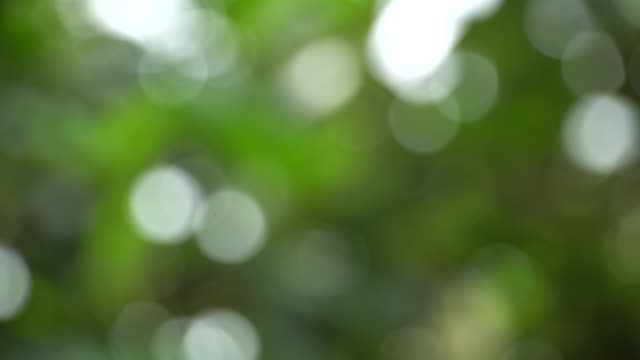 beautiful blurred green nature background - softness stock videos & royalty-free footage